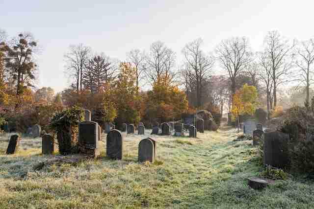 Download von www.picturedesk.com am 13.10.2016 (10:48). Herbstliche Morgenstimmung am Wiener Zentralfriedhof, Simmering, Wien, ÷sterreich, Europa, November 2015 - 20151103_PD16804