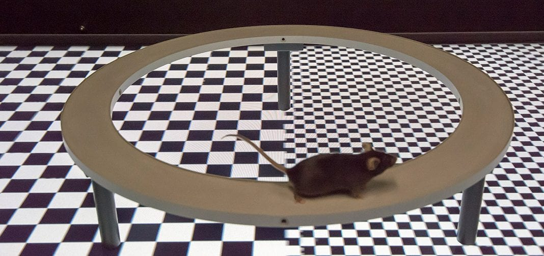 rodent vr