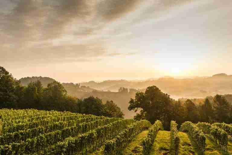 The Südsteiermark Is Austria's Tuscany