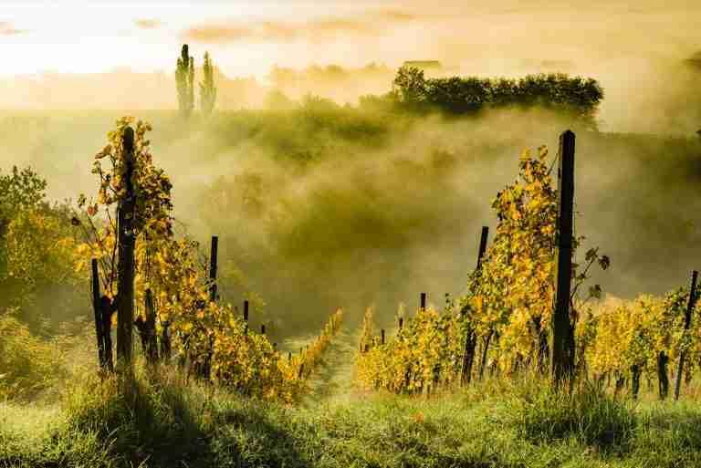 Borderline Brilliant – Wine on the Frontier